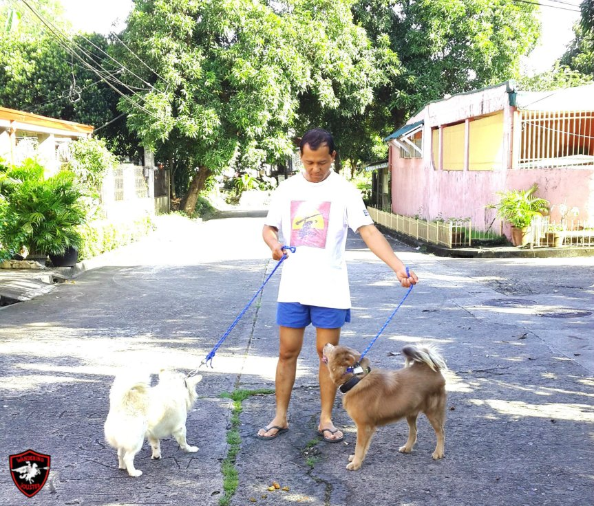 The Royal Gines's Dog Whisperer: Back in Action